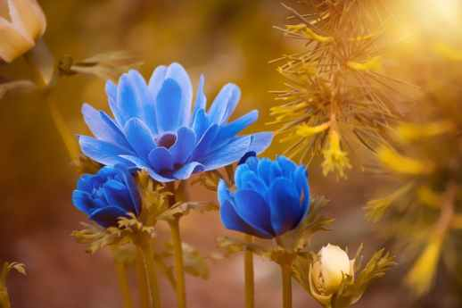 flowers blue sunlit