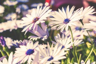 flowers pink and blue