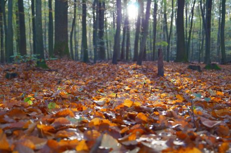 forest, leaves, sun