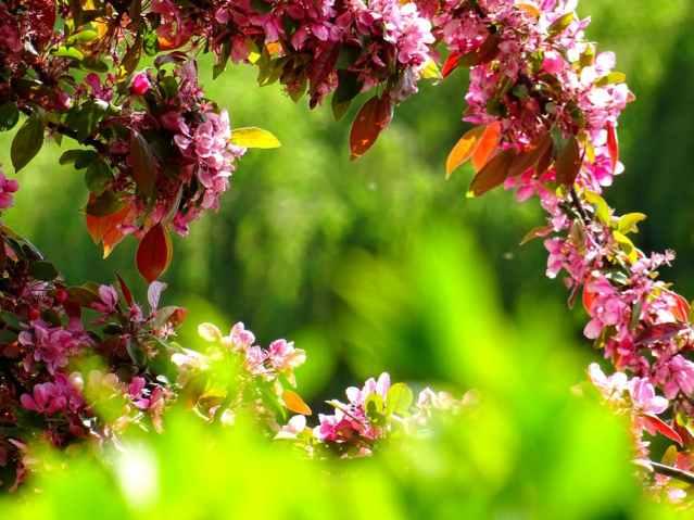 tree flowers blooming