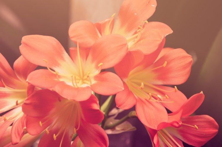 flowers pink in sunlight