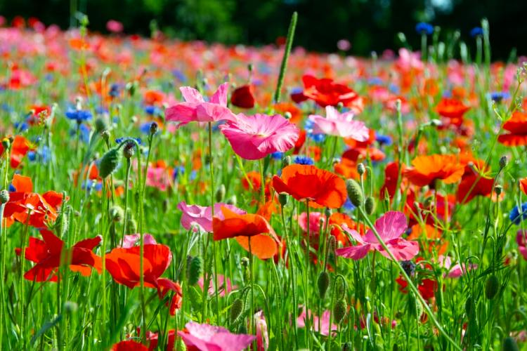 flowers colorful in field