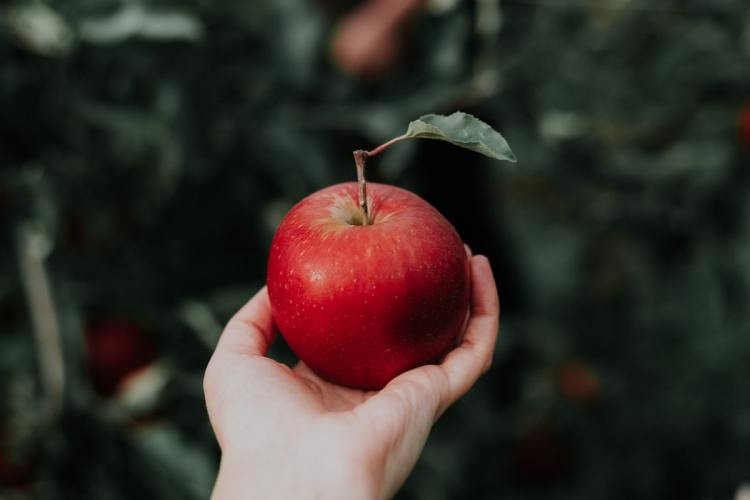 apple the fall