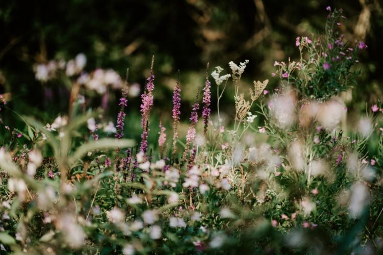 wildflowers purple and white