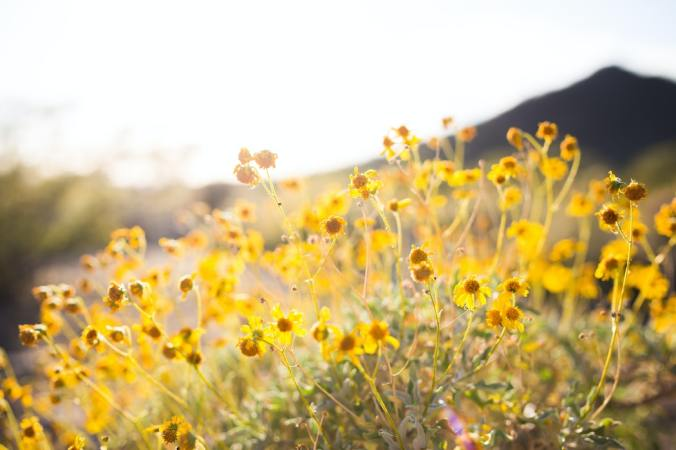 wildflowers yellow sunlit